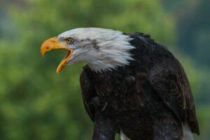 गरुड भरारी घ्यायची आहे ? तर आत्मसात करा हे 7 गुण | Top Learn Qualities form The Eagle in Marathi
