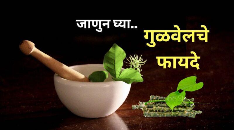 जाणुन घ्या.. गुळवेल खाण्याचे फायदे | Top 8 Benefits of Giloy in Marathi