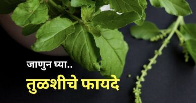 तुळशीचे फायदे | Top 12 Health Benefits of Tulsi (Basil) in Marathi