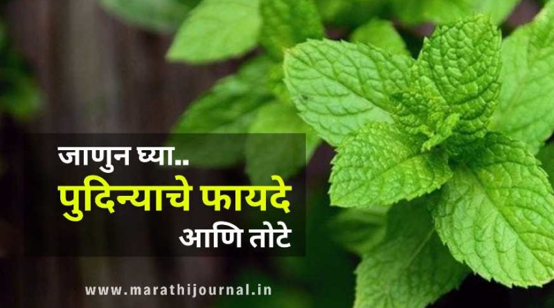 पुदिन्याचे फायदे आणि नुकसान | Pudina Benefits in Marathi